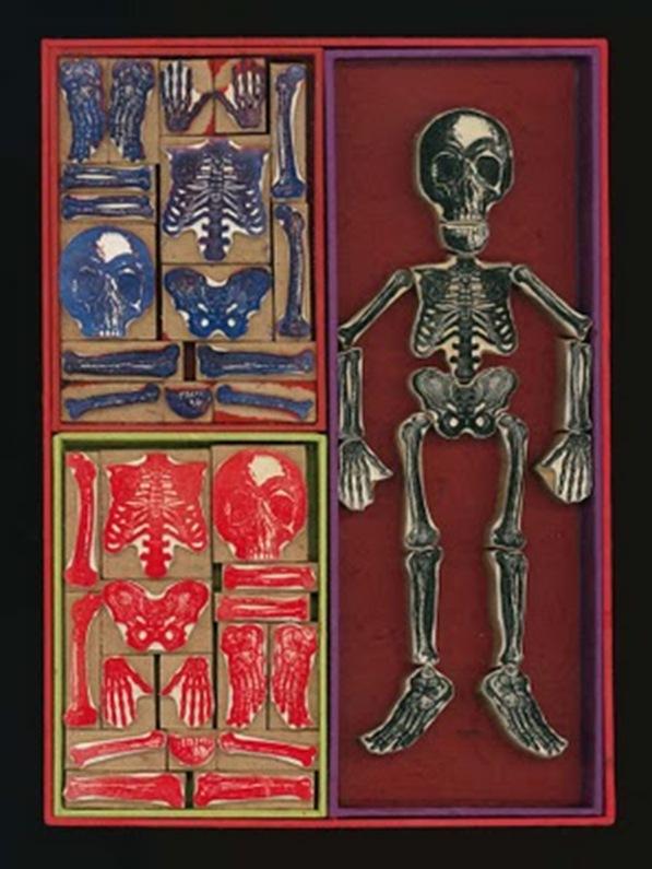 Squelette72