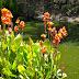 Riparian flora