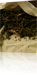 hojas.png