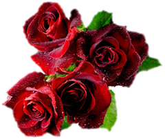 ROSAS_LADY_MEL (1)