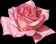 ROSAS_LADY_MEL (8)