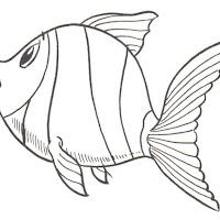 pez_3.jpg