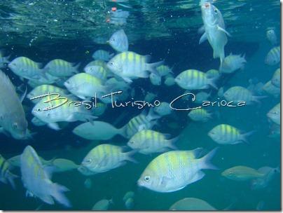 angra dos reis rio de janeiro cardume peixe