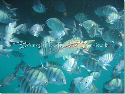 angra dos reis rio de janeiro mergulho com peixes