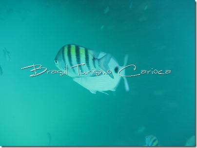 angra dos reis rio de janeiro mergulho peixe