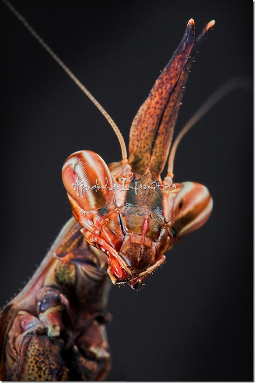 insetos incriveis ajudinha informatica 3