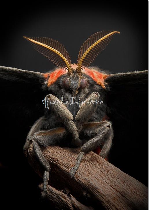 insetos incriveis ajudinha informatica 1