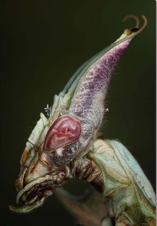 insetos incriveis ajudinha informatica 7