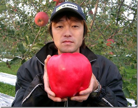 The heaviest apple weighed 1.849 kg  and was grown and picked by Chisato Iwasaki at his apple farm in Hirosaki City, Japan October 24, 2005