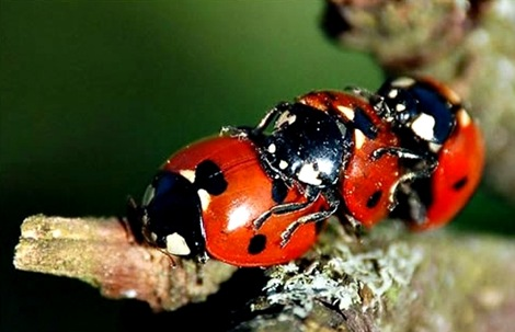 lady bugs threesome
