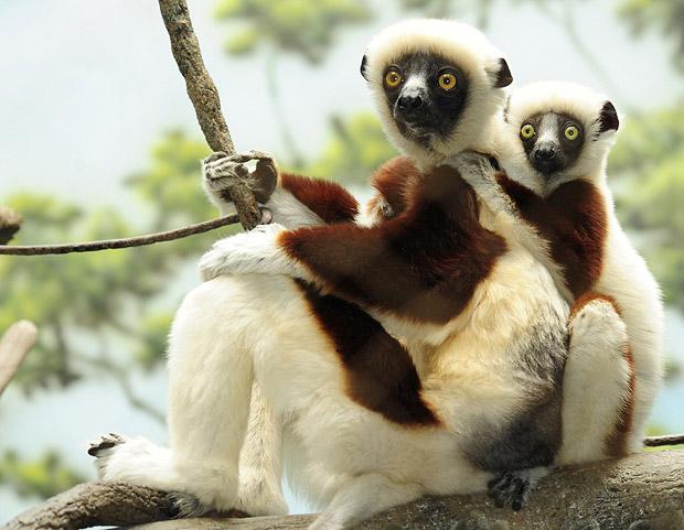 สารพัน สัตว์โลก สัตว์น่ารัก จากทั่วทุกมุมโลก