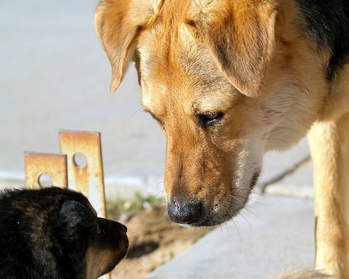 สุนัข สัตว์เลี้ยง ที่น่า