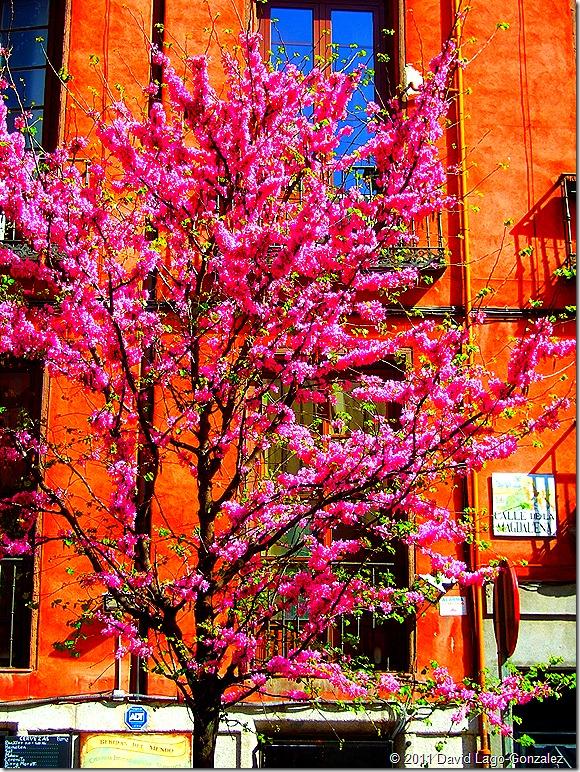 Spring 2011 (Tirso de Molina, Madrid) 001