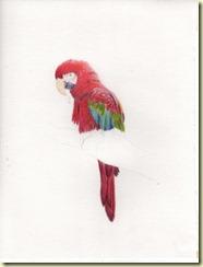 Papagayo 01 001