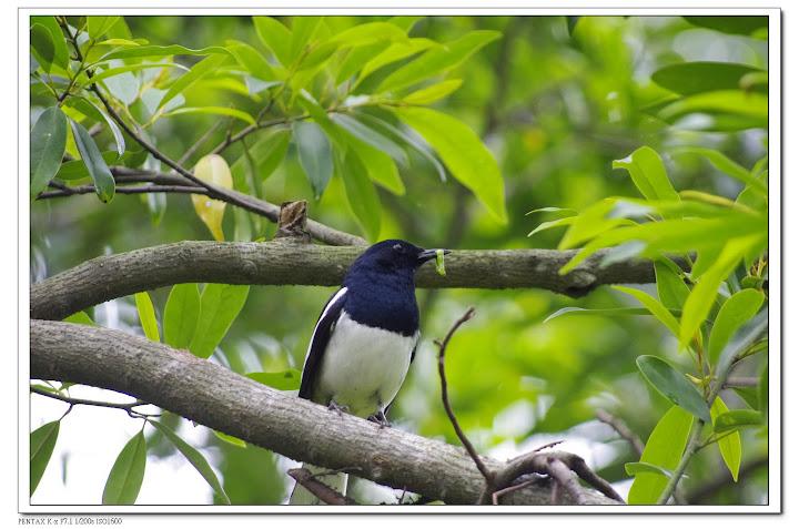 植物園小鳥小花