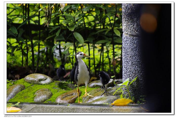 2010-06-06-植物園