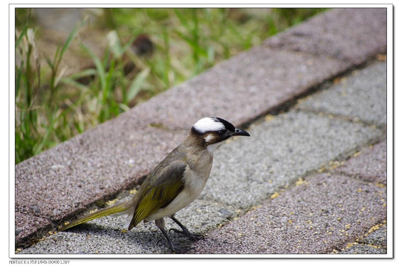 2010-06-19-富陽公園&植物園
