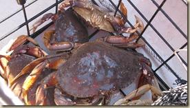 2nd crabbing trip 8 Jul 014