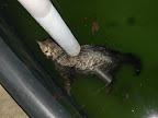 Kočička zamrzlá v barénu Syslova strejdy se stala maskotem akce.