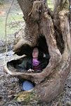 Stromov� kr�ska.