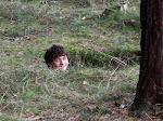 V lese vyrostla Vikučova hlava.