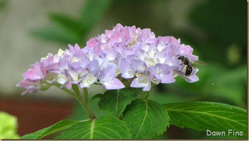 dells garden_022