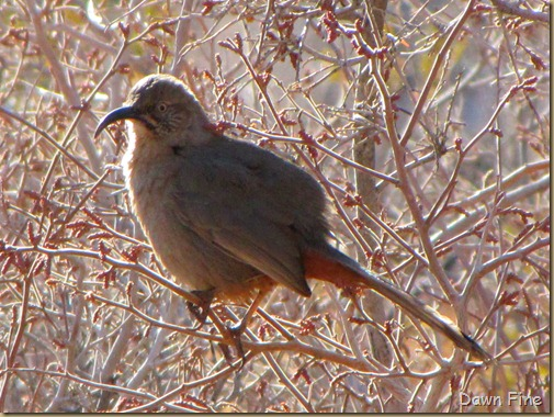 birding with pat_001