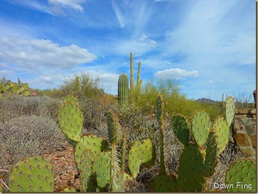 Desert museum_160