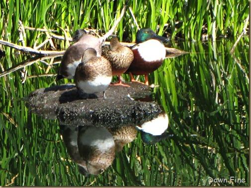 sweetwater wetlands_066