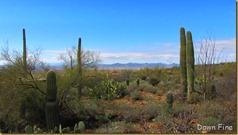 Desert museum_243_thumb