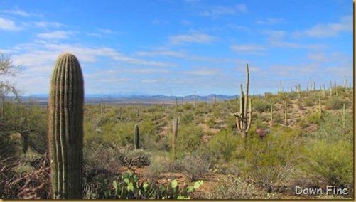Desert museum_066_thumb