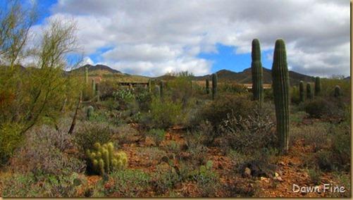 Desert museum_250_thumb