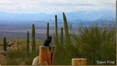 Desert museum_264_thumb