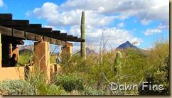 Desert museum_507
