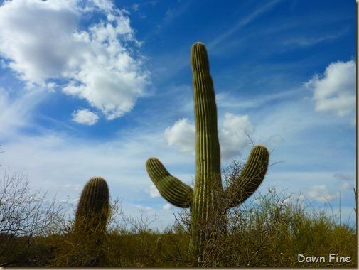 Desert museum_163