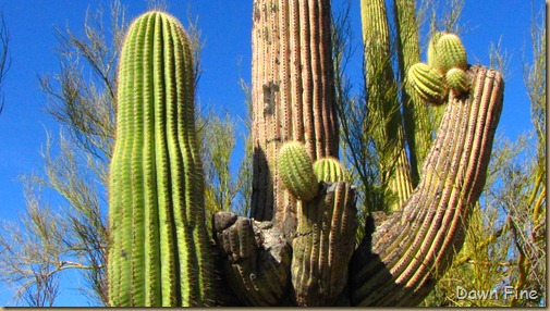 Sonoran NP west_017