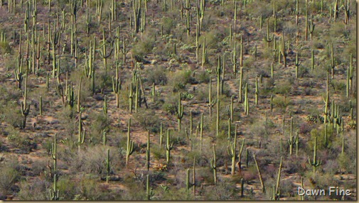 Sonoran NP west_051