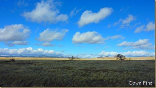 San Rafael Grasslands_016