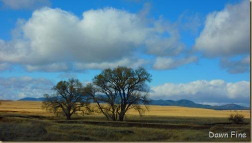 San Rafael Grasslands_018