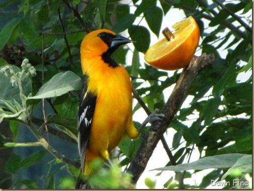 Padre Island birding_225