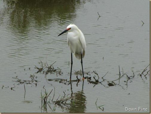 Padre Island birding_112