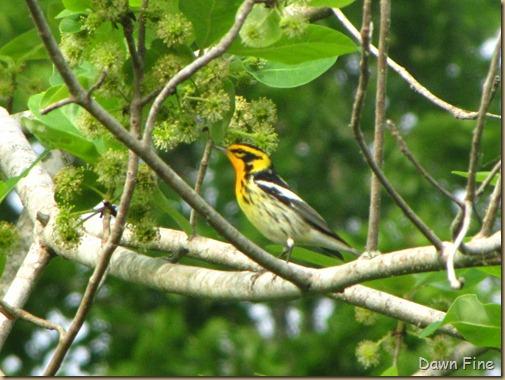 birding high island_075