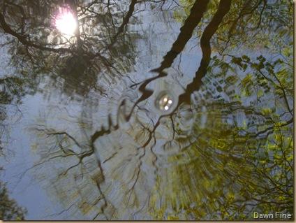 weymouth woods (13)