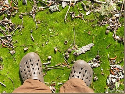 dawns feet on moss_20090504_001