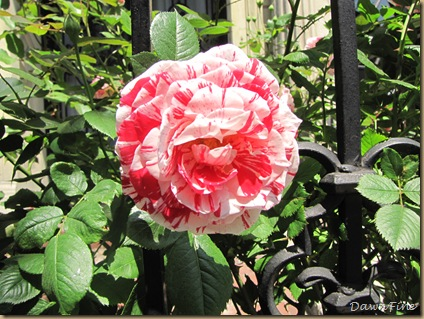 Sams garden _20090524_001