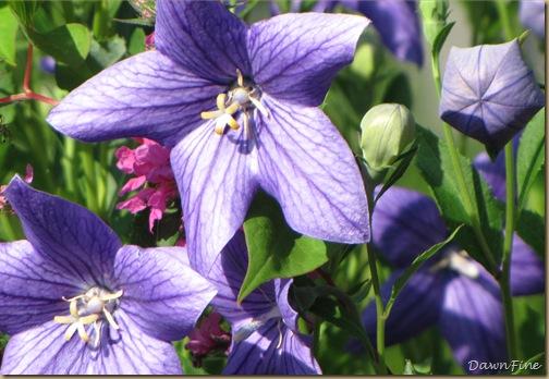 loris garden_20090718_043