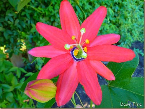 flowers_003
