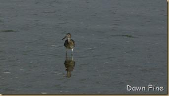south beach birding_005