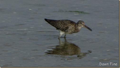 south beach birding_006