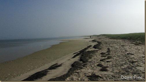 south beach birding_011